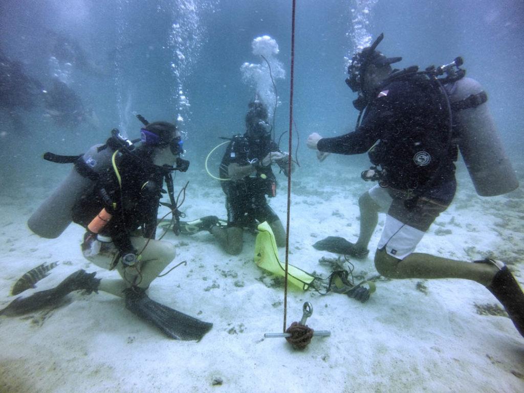 padi adventures in diving manual free download